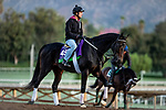 OCT 28: Breeders' Cup Mile entrant Bolo, trained by Carla Gaines, at Santa Anita Park in Arcadia, California on Oct 28, 2019. Evers/Eclipse Sportswire/Breeders' Cup