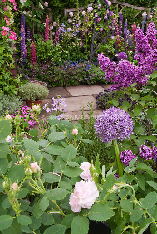Roses, Lilacs, Allium, Flower Garden in June garden scene with stone walkway, Clematis vine on trellis, Lupines, Syringa, Rosa, pots of herbs, for a wonderful lush fragrant cottage cutting garden
