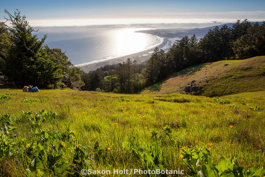 Basking in late afternoon sun on spring meadow overlooking Stinson Beach from Mount Tamalpias State Park, Marin County, California
