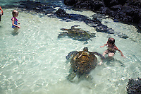 Children swimming with turtles at Richardson Beach Park, Hilo, Big Island.