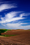 Scenic fields in winter wheat and fallow off Tidwell Road near the town of Palouse in Washington's famous Palouse Country, a breadbasket of the United States and a cornicopia of landscape.  Agricultural vertical landscape.  Contour plowing.