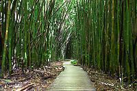 A thick bamboo forest surrounds the Pipiwai hiking trail in Haleakala National Park, Kipahulu, Maui.
