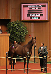 Hip #27 Indian Charlie - Stop Traffic filly sold for $350,000, consigned by Taylor Made Sales at the Keeneland September Yearling Sale.  September 10, 2012.