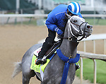 LOUISVILLE, KY - MAY 5:  Mohaymen is shown during morning workouts for the Kentucky Derby and Kentucky Oaks at Churchill Downs on May 5, 2016 in Louisville, Kentucky.(Photo by Joan Fairman Kanes/Eclipse Sportswire/Getty Images)
