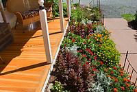 Annuals small garden of mixed flowers marigolds, Dusty miller, bidens, zinnias, celosia, gazania, dahlia, house porch for sense of sunny style, attracting pollinators
