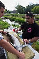 Europe/France/Aquitaine/33/Gironde/Bassin d'Arcachon/Biganos: Elevage d'Esturgeons du Moulin de la Cassadotte - les Esturgeons d'élevage subissent des biopsies de façon a déterminer la présence des oeufs qui donneront le caviar