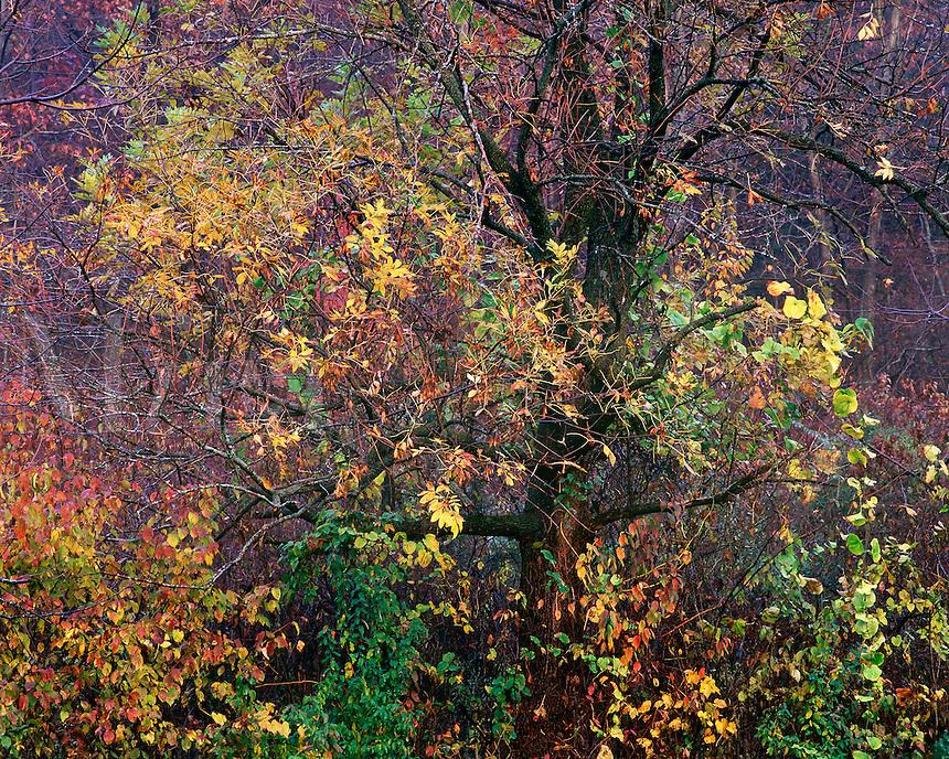 Autumn trees, Mississippi Palisades State Park, Illinois