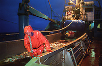 Deckhand Gordon Virfeldt onboard the F/V Progress, a dragger, also known as a trawler, fishes for pollock in the Bering Sea.