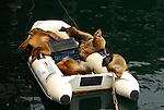 California Marine Mammals