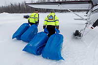 Volunteer pilots Joe Pendergrass and Diana Moroney drag bales of straw destined for the Yentna Checkpoint towards Joe's Cessna airplane during the Willow Fly Outat the Willow Airport prior to the 2019 Iditarod Race on Wednesday February 20, 2019.<br /> <br /> Photo by Jeff Schultz/  (C) 2019  ALL RIGHTS RESERVED