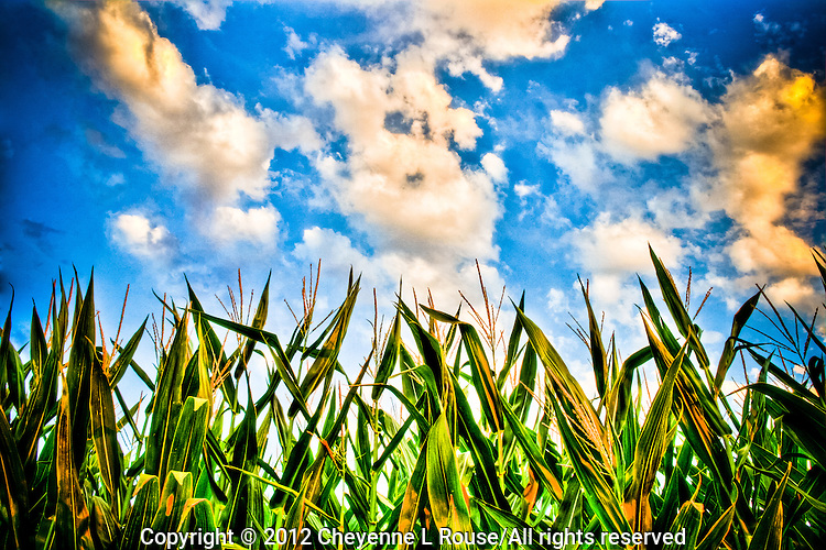 More corn and clouds - Arizona