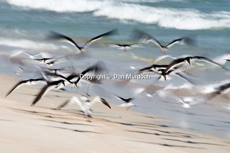 seagulls take flight on beach