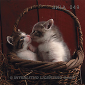 Carl, ANIMALS, photos(SWLA049,#A#) Katzen, gatos