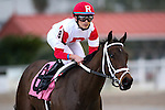 NEW ORLEANS, LA - JANUARY 21:<br /> Kittens Roar #8 ridden by Miguel Mena wins the Marie G. Krantz Memorial Stakes at the Fairgrounds Race Course on January 21,2017  in New Orleans, Louisiana. (Photo by Steve Dalmado/Eclipse Sportswire/Getty Images)