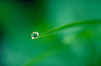 Dewdrop glistens atop a single blade of grass.