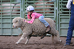 Cheyanne Stein competes in the Mutton Busting event at the 5th Annual Carson City Bulls, Broncs & Barrels event at Fuji Park, in Carson City, Nev., on Saturday, July 29, 2017. <br /> Photo by Cathleen Allison/Nevada Photo Source