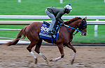 October 30, 2020: Cowan, trained by trainer Steven M. Asmussen, exercises in preparation for the Breeders' Cup Juvenile Turf Sprint at Keeneland Racetrack in Lexington, Kentucky on October 30, 2020. Scott Serio/Eclipse Sportswire/Breeders Cup/CSM