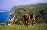 Mules on Tropical Hillside