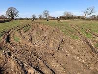 Photo: Richard Lane/Richard Lane Photography. Compacted, poached soils. 22/03/2020.