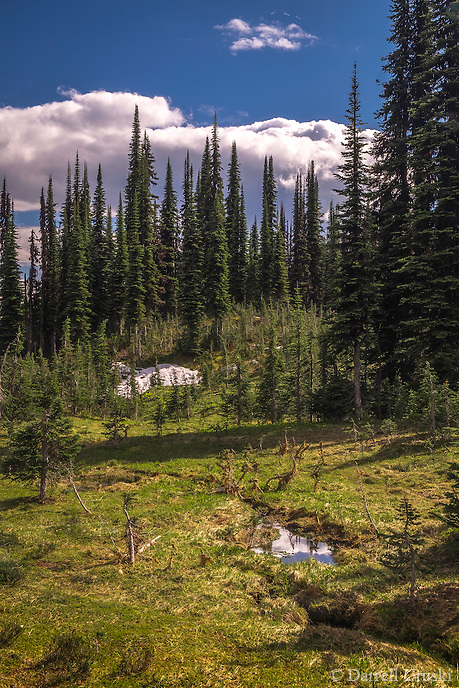 Landscape scenic, art photograph, of the Meadows in the Sky Parkway which contains alpine forests of cedar and hemlock, spruce and fir trees that is located in Mount Revelstoke National Park near the City of Revelstoke, in British Columbia, Canada.