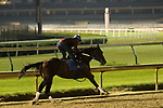 LOUISVILLE, KY --MAY 14: Tenfold works four furlongs in :49.40 at Churchill Downs, Louisville, Kentucky in preparation for the Preakness Stakes in Baltimore, Maryland.  (Photo by Mary M. Meek/Eclipse Sportswire/Getty Images)