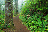 Cape Lookout trail, Cape Lookout State Park, Oregon, USA, North America
