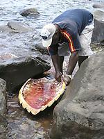 Dead male hawksbill turtle, Eretmochelys imbricata, Soufriere, St Lucia, West Indies, Caribbean