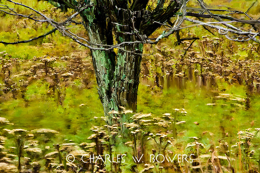 Have you ever just watched a natural meadow sway with the falls winds? The rhythm can be mesmerizing lulling you into a place that removes all your cares. This natural meadow in Tucker County has that effect on me.<br /> <br /> -Limited Edition of 50 Prints
