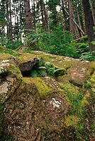 Petroglyphs in rainforest above Thorsen Creek, Bella Coola, BC, Canada