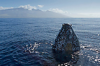 Humpback comes up to look at the boat with the West Maui Mountains in the distance.