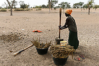 SENEGAL, Sahel, village Ngoxé Djoloff, women pound millet with wooden mortar / Frauen stampfen Hirse