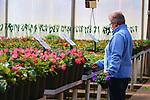 A shopper in a nursery greenhouse