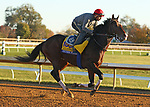 Higher Power, trained by trainer John W. Sadler, exercises in preparation for the Breeders' Cup Classic at Keeneland Racetrack in Lexington, Kentucky on November 4, 2020.