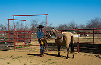 Dallas Texas Tate Ranch cowboy training 2 year old horses to put on first saddle on them for training at ranch to break them for riding   2