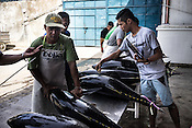 Workers from Meliomar check the freshness of the sustainably caught yellow fin tuna as it is received at the Casa, the Tuna buying house in Puerto Princesa, Palawan in the Philippines. <br /> Photo: Sanjit Das/Panos for Greenpeace