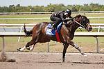 #119Fasig-Tipton Florida Sale,Under Tack Show. Palm Meadows Florida 03-23-2012 Arron Haggart/Eclipse Sportswire.