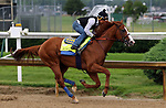 LOUISVILLE, KY -MAY 29: Kentucky Derby and Preakness winner Justify, ridden by Martin Garcia, breezes 4 furliongs in :46.8 at Churchill Downs, Louisville, Kentucky, in preparation for the June 9 Belmont Stakes in New York. (Photo by Mary M. Meek/Eclipse Sportswire/Getty Images)