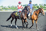 We Miss Artie(6) with Jockey Javier Castellano aboard at the 155th Queen's Plate at Woodbine Race Course in Toronto, Canada on July 06, 2014.