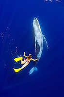 woman snorkeler and humpback whale, Megaptera novaeangliae, Pacific Ocean