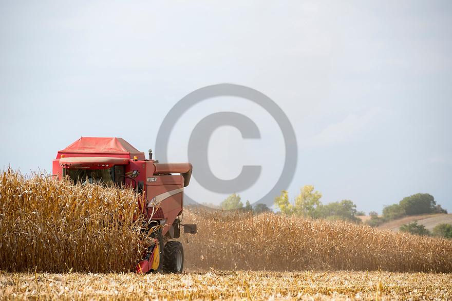 14/09/18 - THURET - PUY DE DOME - FRANCE - Recolte de maïs de consommation - Photo Jerome CHABANNE