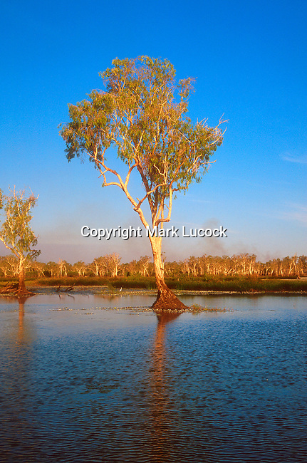 Lone tree, Yellow Waters sunset, Kakadu National Park, Northern Territory