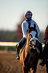 November 2, 2020: Tiz The Law, trained by trainer Barclay Tagg, exercises in preparation for the Breeders' Cup Classic at Keeneland Racetrack in Lexington, Kentucky on November 2, 2020. Alex Evers/Eclipse Sportswire/Breeders Cup