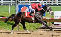 Myrasira winning at Delaware Park on 6/5/13