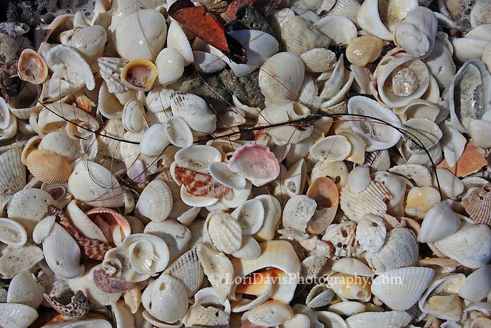 Shell Mix 5