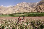 Pakistani children, Askole Village, Pakistan