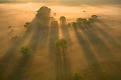 Cottonwood shadows in morning fog