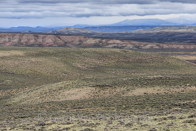 Sagebrush-steppe landscape north of Big Piney. Sublette County, Wyoming. June.