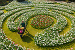 UK WEATHER INPUT - Wednesday 21st April<br /> <br /> Pictured: Horticulturist Rose Philpot today carries a wheelbarrow of tulips through the labyrinth of daffodils and tulips that have bloomed due to the recent warm weather at Arundel Tulip festival at Arundel Castle in West Sussex.<br /> <br /> Due to the easing of coronavirus restrictions, visitors will now be able to visit the annual festival at the historic walled castle with over 120,000 tulips in bloom. <br /> <br /> There are 130 different varieties of tulip currently on display at the stately home in the heart of West Sussex.<br /> <br /> © Jordan Pettitt/Solent News & Photo Agency<br /> UK +44 (0) 2380 458800