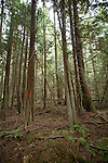 Jefferson Land Trust, Bulis Forest Preserve, forest thinning, Port Townsend, Jefferson County, Olympic Peninsula, Washington State, Pacific Northwest, United States, land preservation,