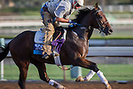 OCT 27 2014:Lawn Ranger, trained by Ken McPeek, exercises in preparation for the Breeders' Cup Juvenile Turf at Santa Anita Race Course in Arcadia, California on October 27, 2014. Kazushi Ishida/ESW/CSM